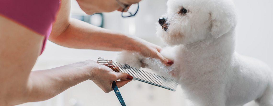 puppy in grooming studio