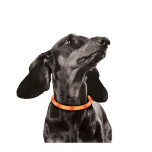 M-PETS Adjustable Silicon LED Collar