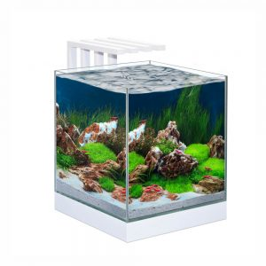 CIANO Nexus Pure 25 Aquarium with LED Light