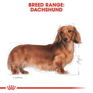 ROYAL CANIN Dachshund Adult Pouch, 85g