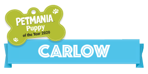 Petmania Puppy of the Year Carlow