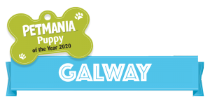 Petmania Puppy of the Year Galway