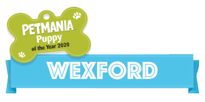 Petmania Puppy of the Year Wexford