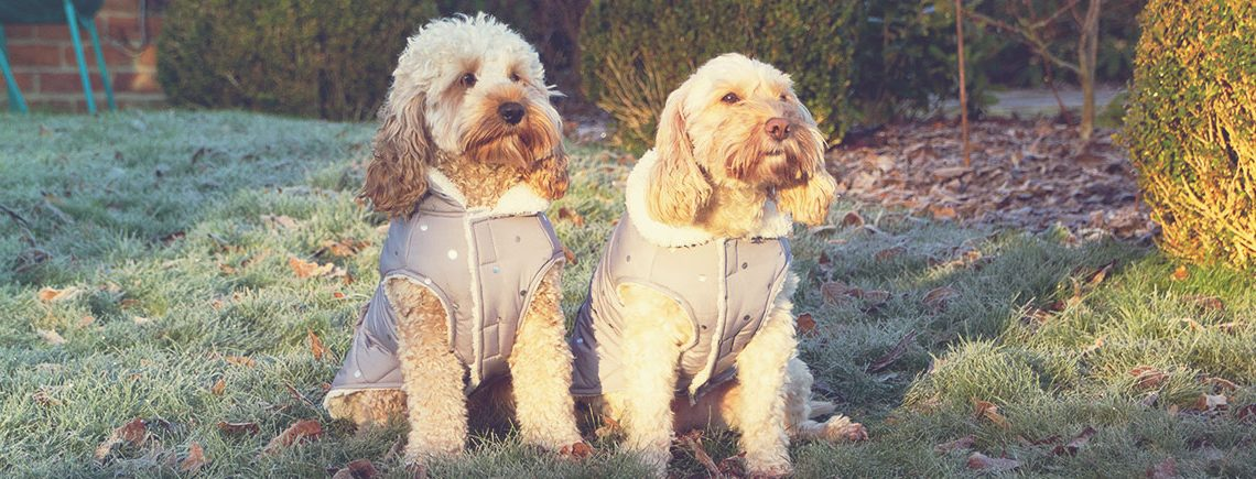 Christmas coats and jumpers for dogs