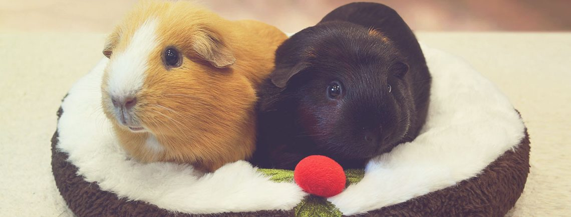 Christmas Pudding Snuggle Bed for Guinea Pigs