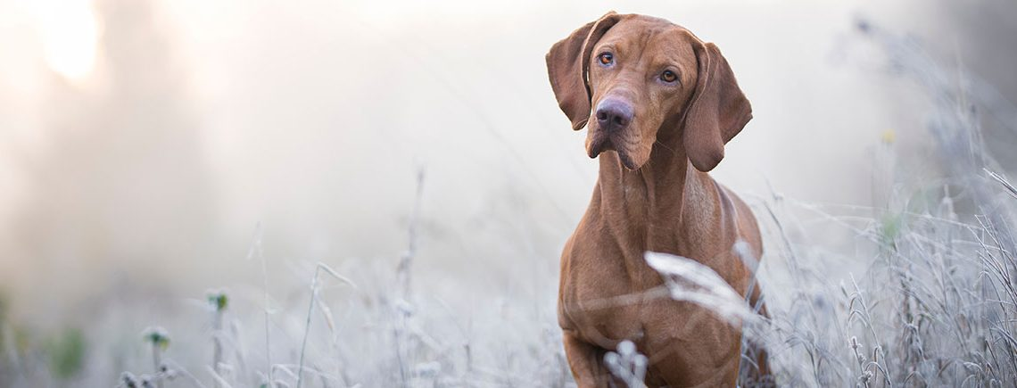 Protect Your Pet During Cold Weather