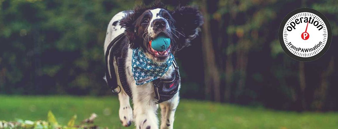 Dog-Running-with-Ball-Sportspet