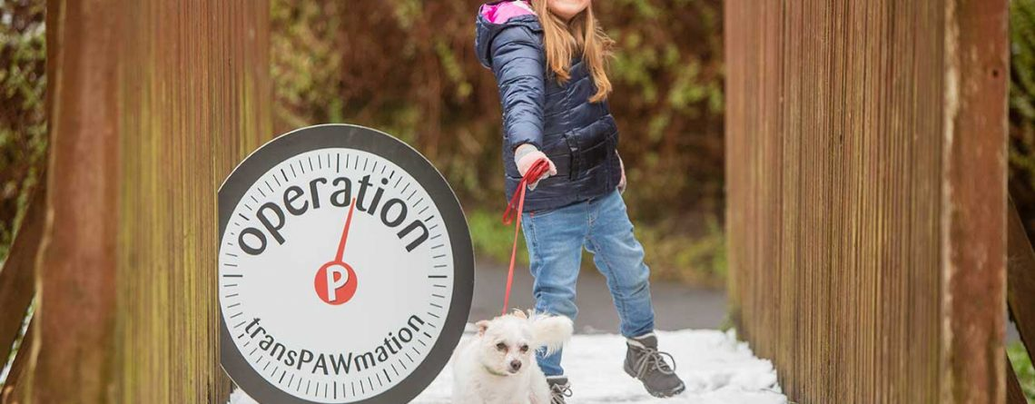Una-Mulbyrne-from-Portlaoise Launches Operation TransPAWmation by taking her dog Lilly for a Walk