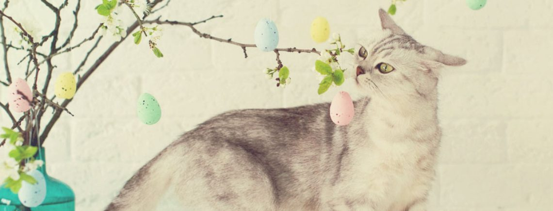 Curious cat sniffing a mini easter egg hanging from a tree branch indoors