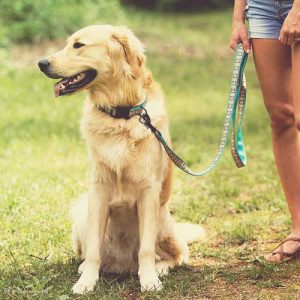 Shop-Collars-Leads-and-Harnesses-for-Dogs