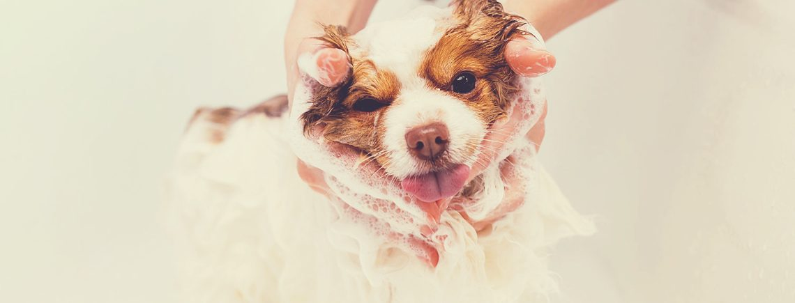 Puppy having a bath at grooming studio for the first time