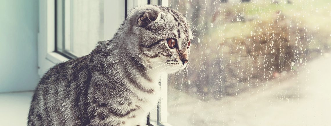 cat looking out the window at rainy weather