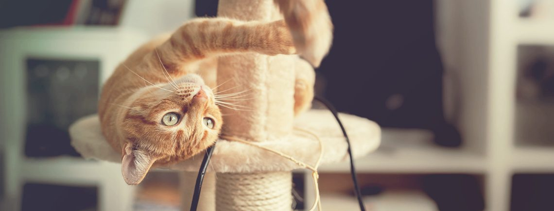 Brown tabby cat with green eyes lying on a scratching tower, tries to catch the tail of another cat