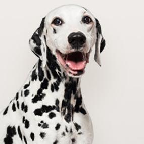 Dog-Department