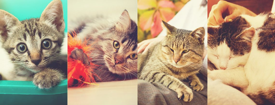 Life Stages of Cat Blog Banner