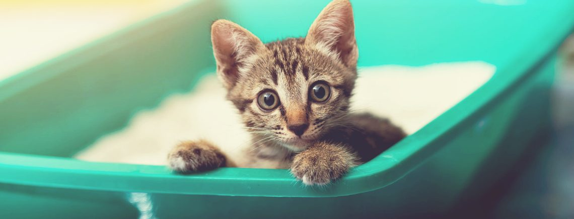 Small kitten looking at camera from a green litter box