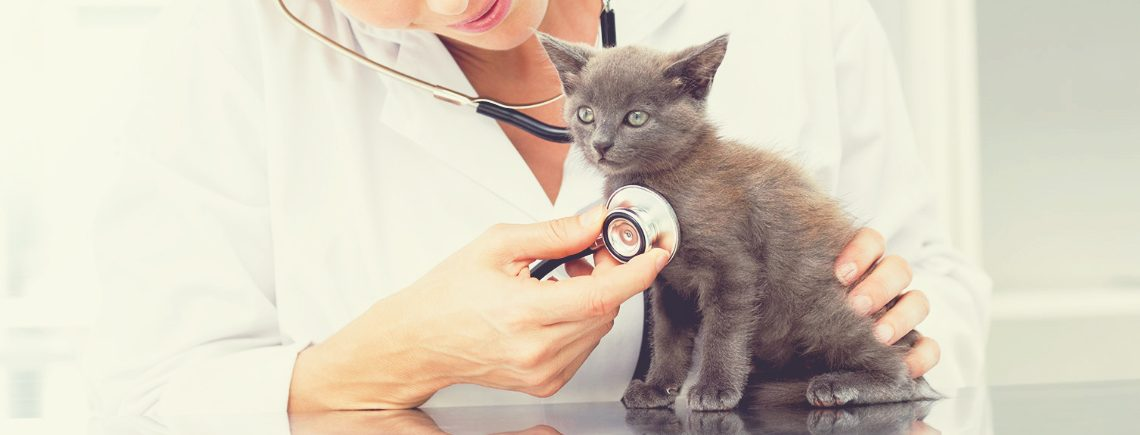 vet examining kitten with stethoscope in hospital before vaccinations