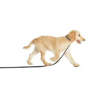 COA Puppy Training Line, Black
