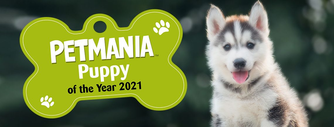 Petmania-Puppy-of-the-Year-2021