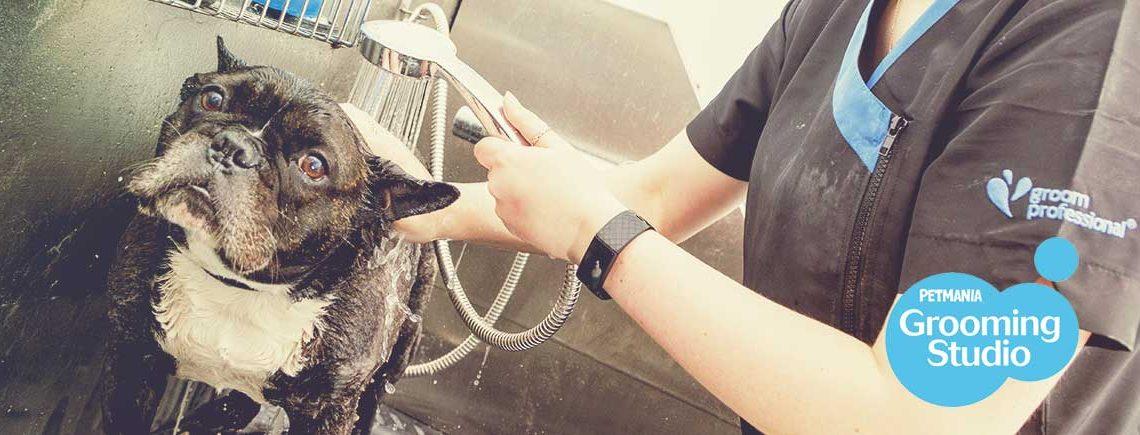 Dog-in-Bath-at-Petmania-Grooming-Studios