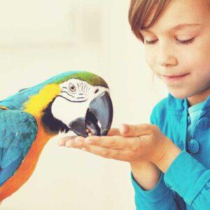 bird healthcare