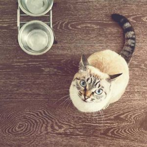 cat feeder and bowls