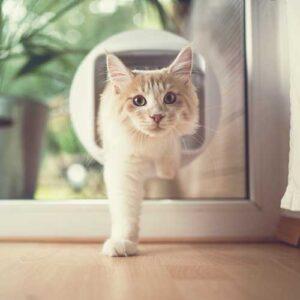 cat flaps and doors