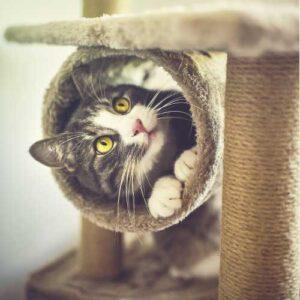 cat scratchers and furniture