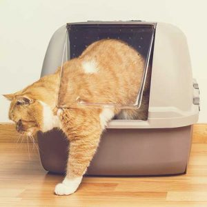cat toilet and litter trays