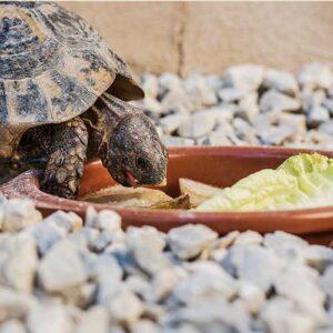 reptile feeder & food storage