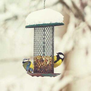 garden bird feeders and tables