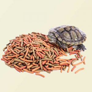 feeding and supplements for reptiles