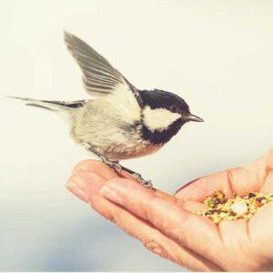 garden bird food
