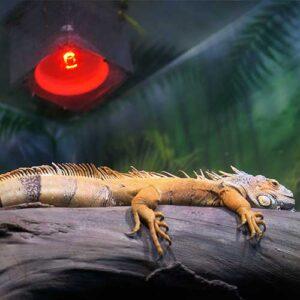 heating reptile