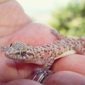 healthcare for reptiles