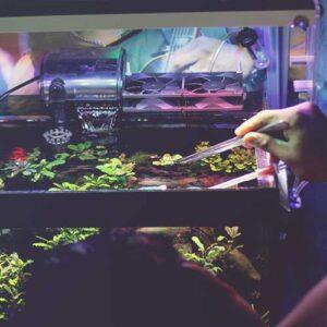 maintenance for aquarium