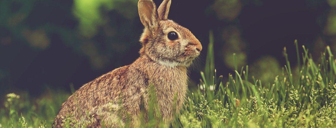 rabbit outside in garden looking up